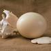 egg/shell