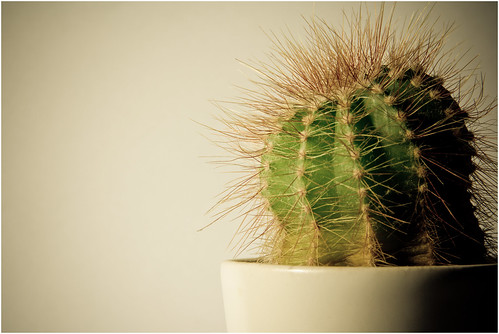 Cactus | by D.W Images Photography