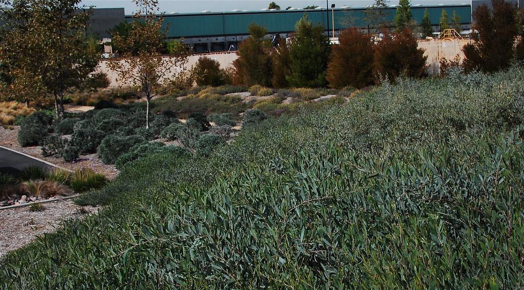 Drought Tolerant Landscape Design Orange County