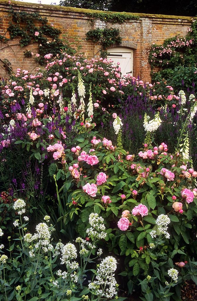 Rose Perfume: Mottisfont Abbey Rose Gardens, Hampshire, England