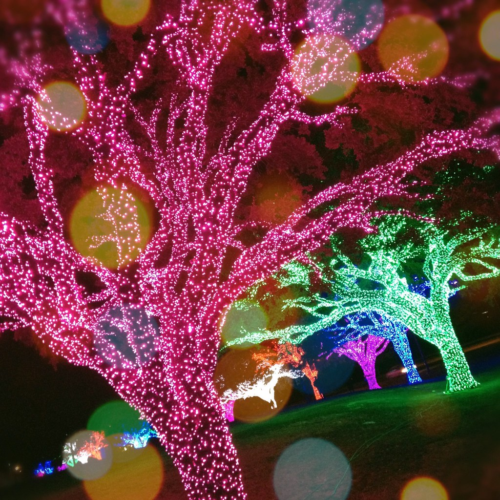 Christmas Lights Dfw 2020 Free Christmas Lights Dfw 2020 Honda | Bbneun.supernewyear.site