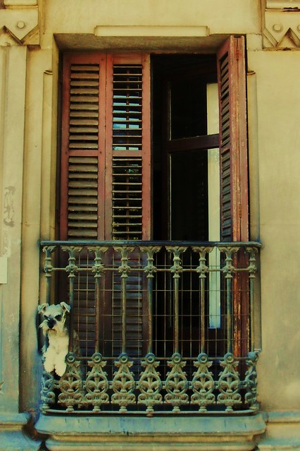 Dog in spanish balcony flickr photo sharing for Balcony in spanish