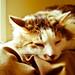 035: Cat nap