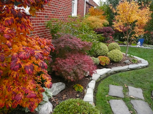Japanese maple fall garden flickr photo sharing for Garden design with japanese maple