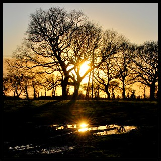 sunpuddle | by Ian's Art....