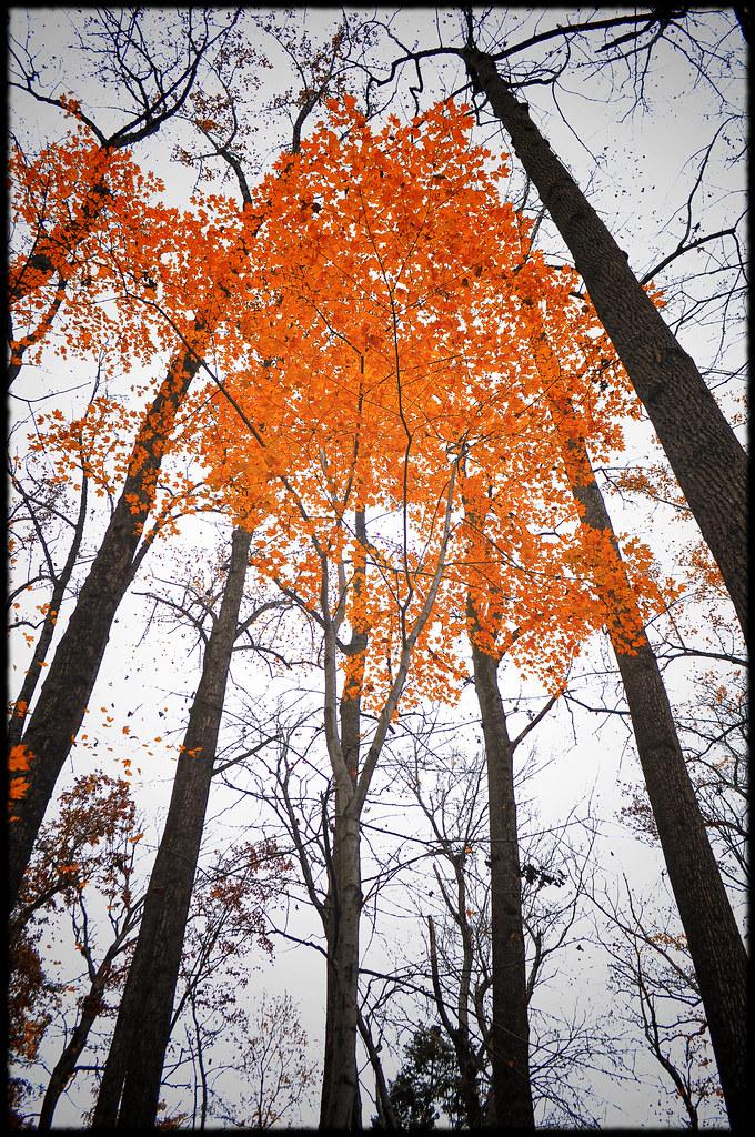 Last Touch Color Zakvta Flickr