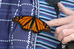 Photo by Charles Shen of butterfly that landed on my jacket! =)