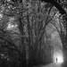 walk for life - EXPLORE #1 - 31/01/13