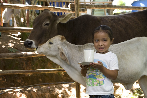 HN201006-261 | by Heifer International