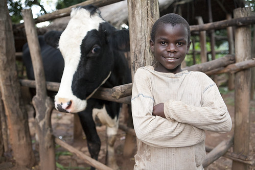 Dairy Livestock Production Project (Project # 21-0130-01) | by Heifer International