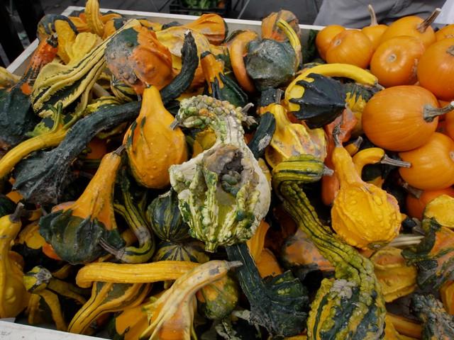 おもしろカボチャGourd (瓜科の植物)ハロウィンの飾り