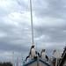 Penguin Sailors