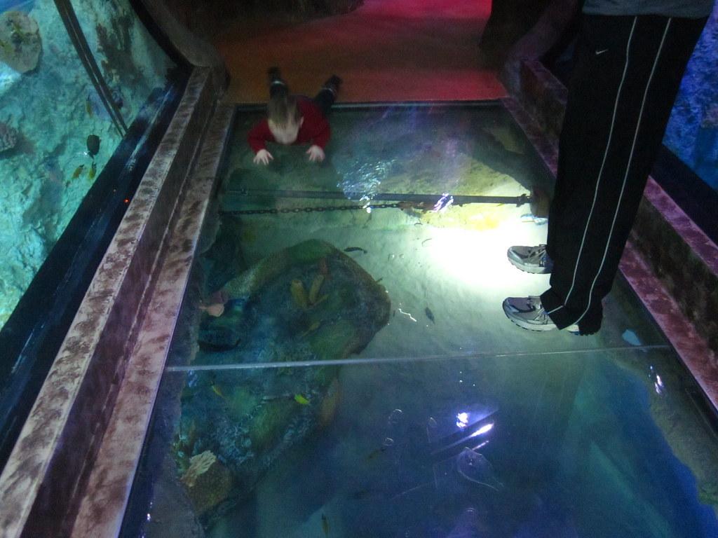 Sea Life Grapevine Aquarium Adam Groffman Flickr