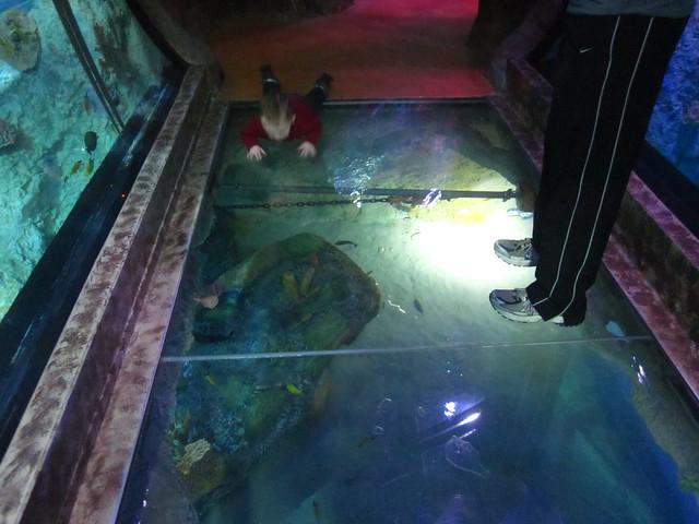 Sea Life Grapevine Aquarium Flickr Photo Sharing