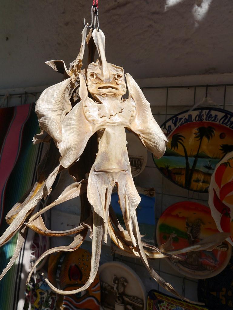 dried devil fish for sale in puerto vallarta  jalisco  mex