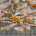 candied-orange-peel-3