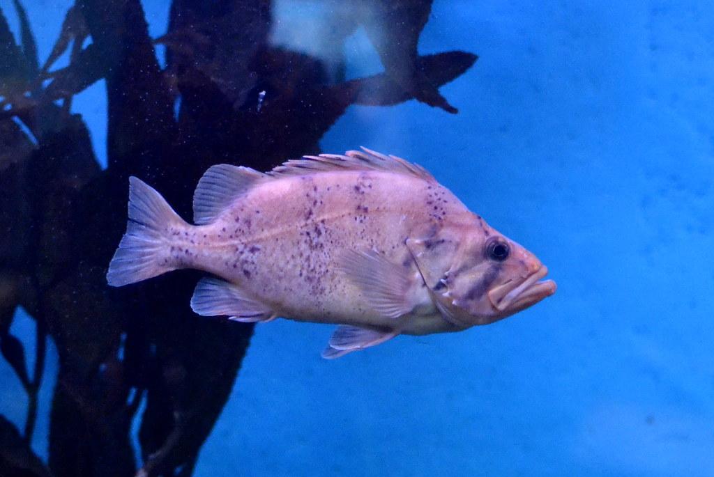 Image Result For Cabrillo Marine Aquarium