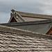 roof study iv
