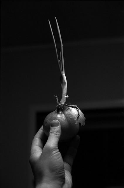 A Single Onion