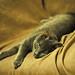 Iggy The Cat 01