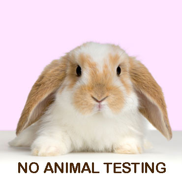 a discussion on animal testing Dr katy taylor, cruelty free international head of science, meets with the  european commission to discuss the european ban on animal tested cosmetics.
