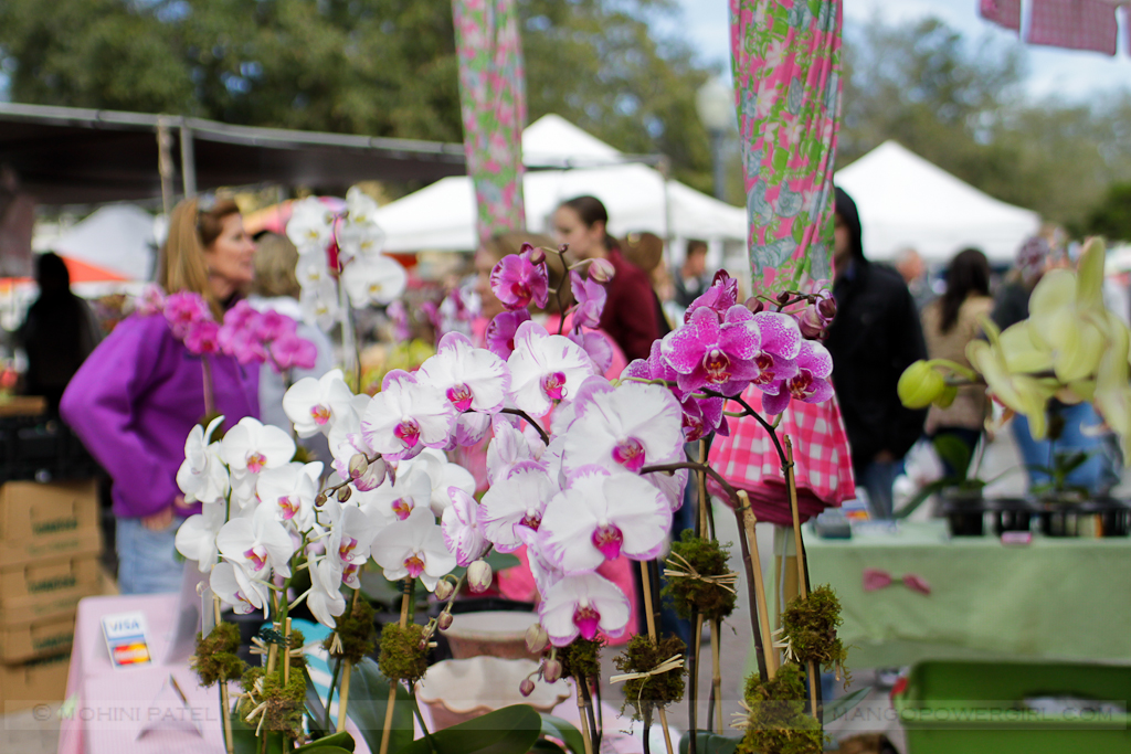 orchid vendor at winter park farmers market, florida