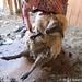 2012 Sheep shearing day 1 - FarmgirlFare.com