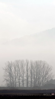 trees_in_fog | by alamond