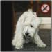 No Dogs in Wolfisberg