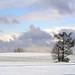 Winter sky ~