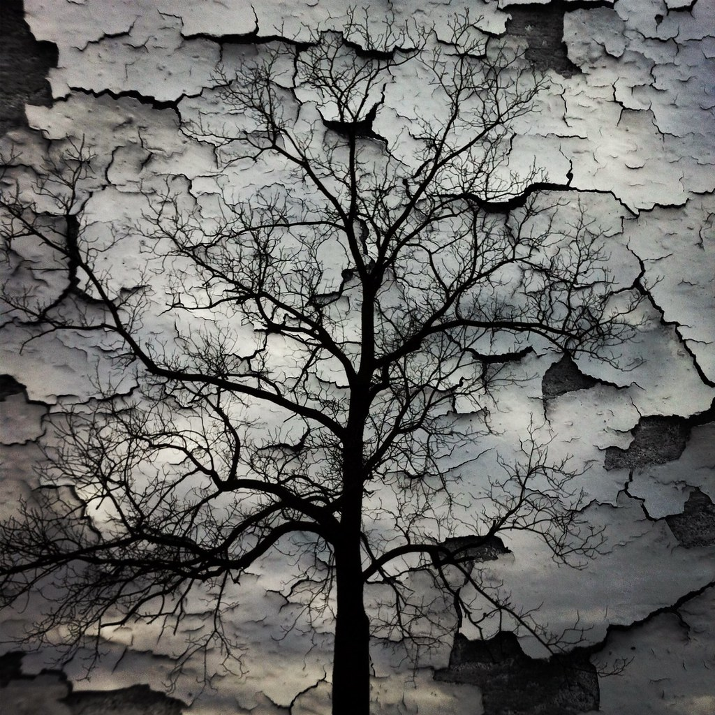 Peeling Winter | Jabiz Raisdana