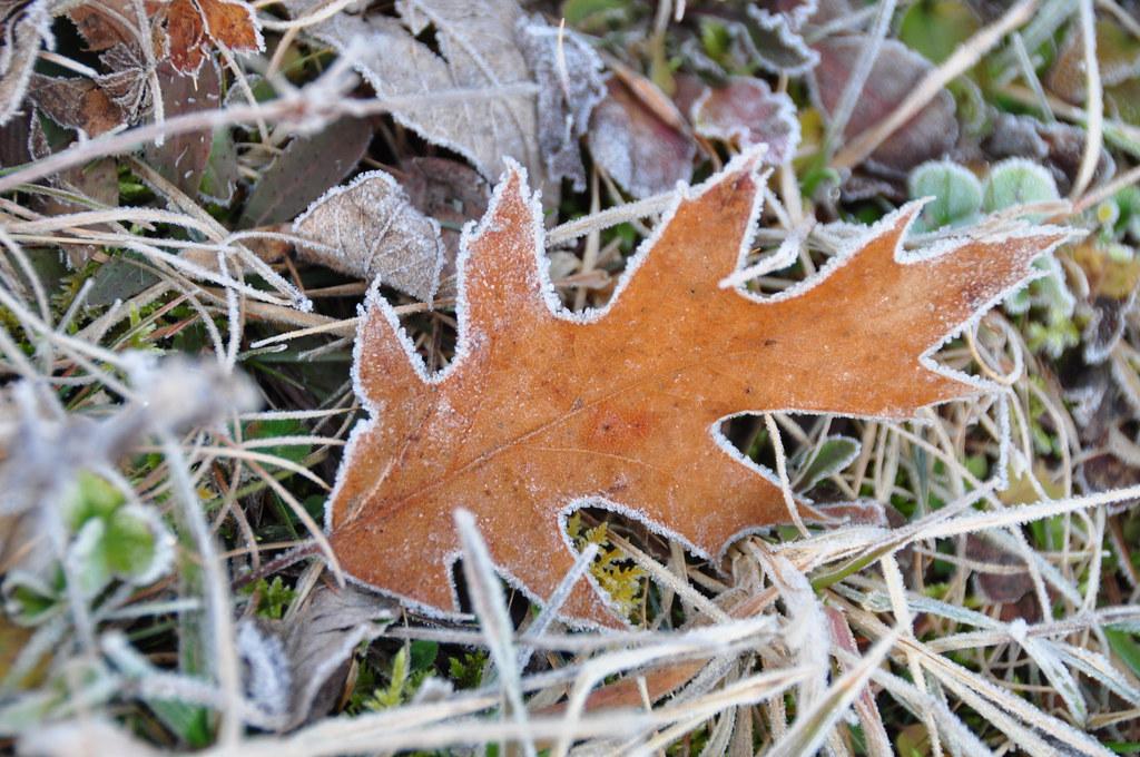 В Харькове будет холодно: Прогноз погоды на завтра