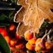 {04} Frosty Berries