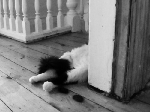 GUARDCAT.02.BW | by Scout & Catalogue