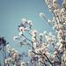 Open Spring