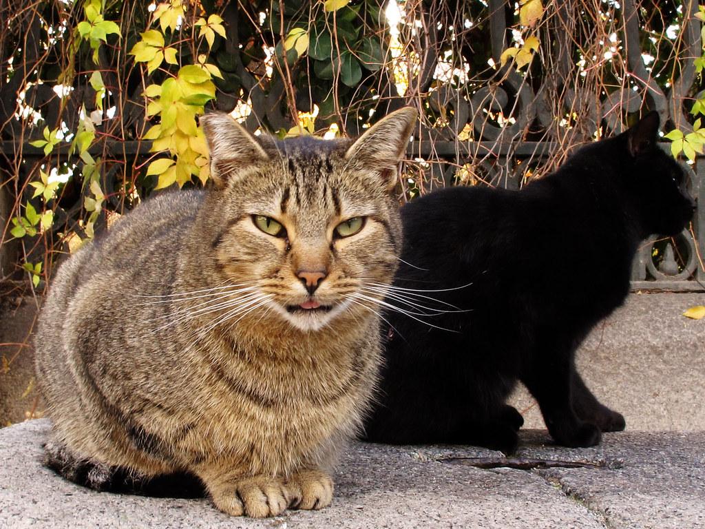 El gato del jardin botanico de madrid el gato es uno for Ahuyentar gatos del jardin