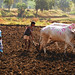 Toiling Farmer