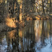 Reflections of the Pond - First Ice