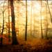 lighting forest ...