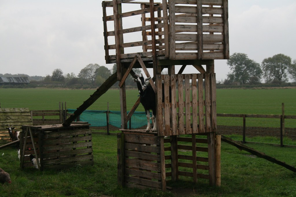 Goat in a climbing frame at Eshott Heugh Animal Park - Eshott ...: https://www.flickr.com/photos/glenbowman/6597156691