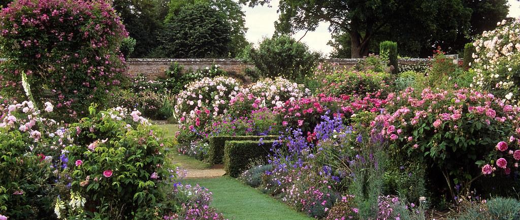 Mottisfont abbey rose gardens hampshire uk a first cla - Les plus beaux jardins de particuliers ...