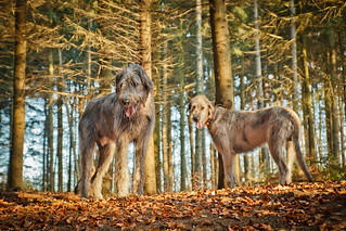 Hounds in the Forest | by FBeer!