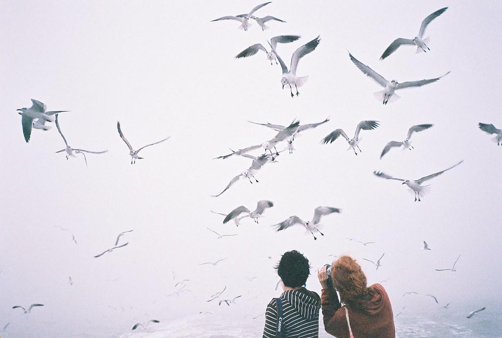 birds we heart it ile ilgili görsel sonucu