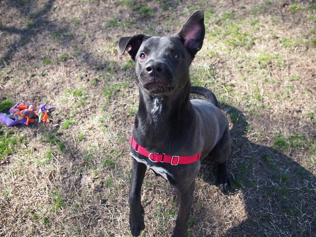 Image Result For Positive Dog Training
