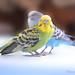 Our birds