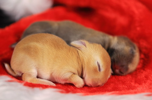 Sleeping Bunnies | by ♥ Spice (^_^)