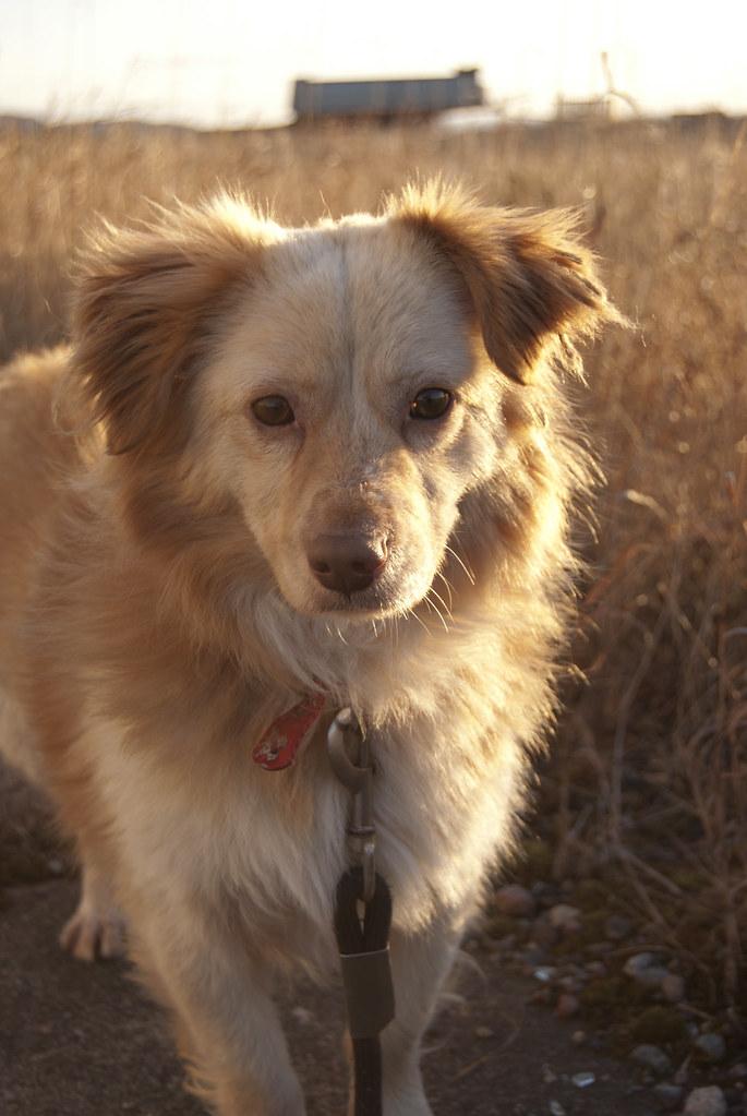 Free Dog Adoption Dallas