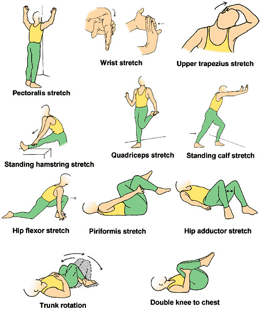 Male Static Stretching Chart: Stretching_exercises_chart