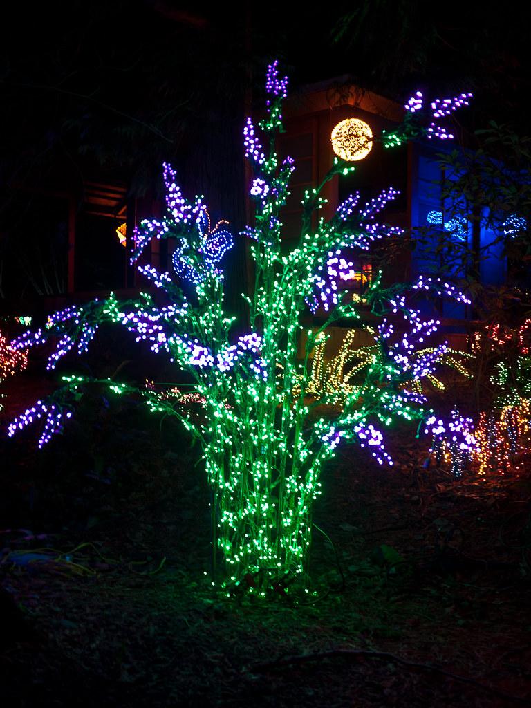 Bellevue botanical garden garden d 39 lights amy flickr for Bellevue botanical garden lights