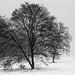 1201 - Albero e neve